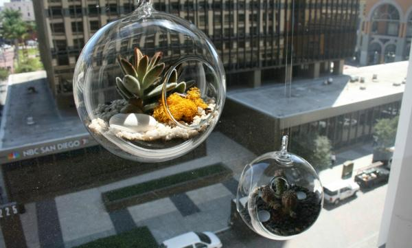 Terrariums bring the indoors out in urban environments.