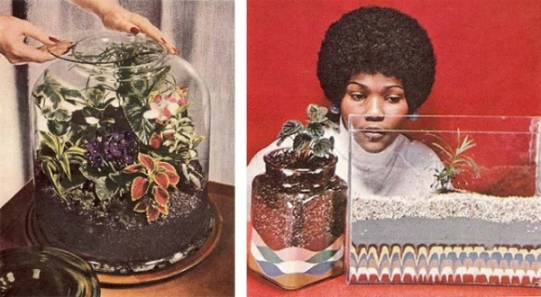 Terrariums are often associated with the 1970's